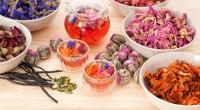 בעשורים האחרונים בוצעו מחקרים רבים שניסו לבחון את השפעת התה הירוק על בריאות האדם. בין היתר מחקרים אלו נערכים במטרה לנסות לבודד גורם תזונתי בודד הגורם להבדלים בשכיחותן של מחלות […]